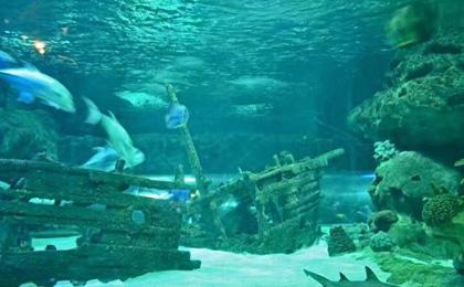 海豚号潜水俱乐部